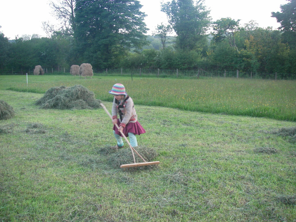 There's a job for everyone - gleaning up stray bits with an especially made child sized hay rake