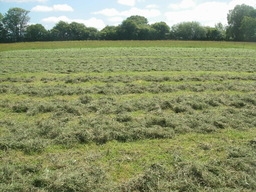 Hay spread in the sun. The most recently mown at the top, down to hay ready to cart at the bottom
