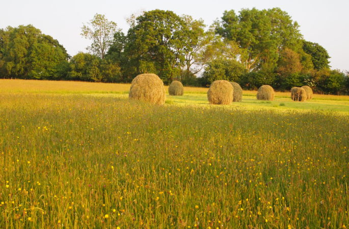 Hay racks in the meadow