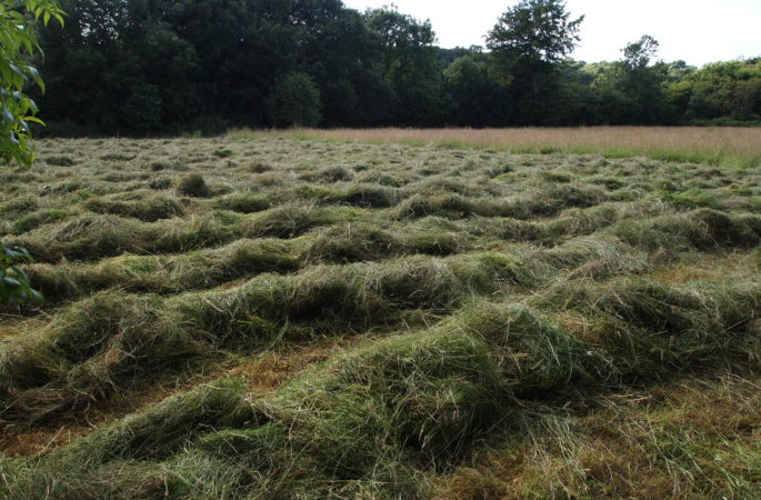 Hay rowed up for the night on Cae Mari Jones
